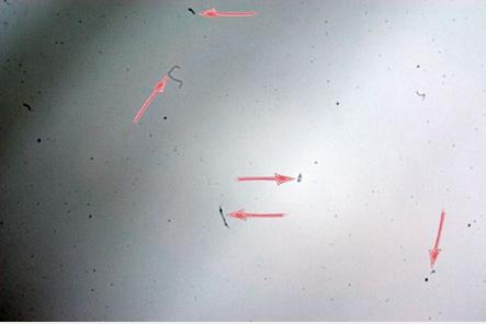 The presence of impurities on the matrix of the photosensor DOED (arrows indicate the presence of dust impregnations)